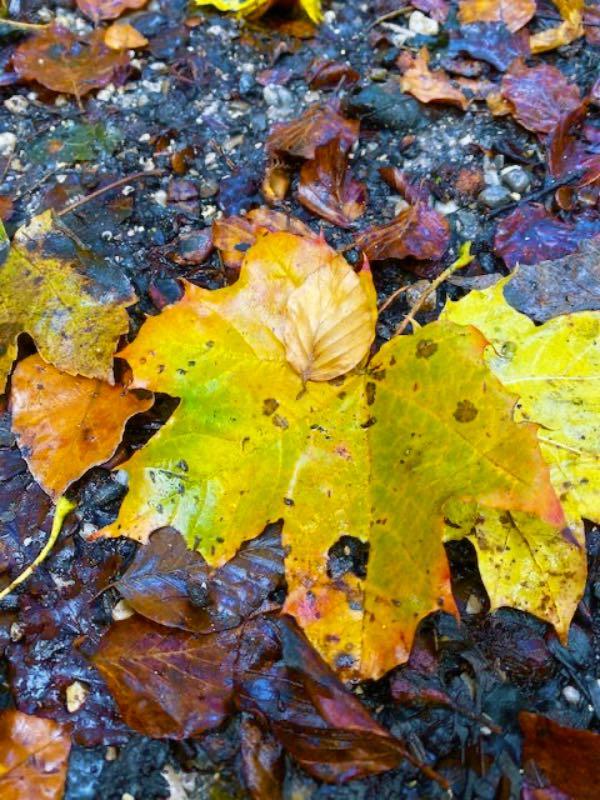Die Arche Konzept Blätter im Herbst